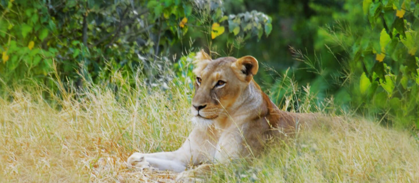 Makalali Private Game Reserve