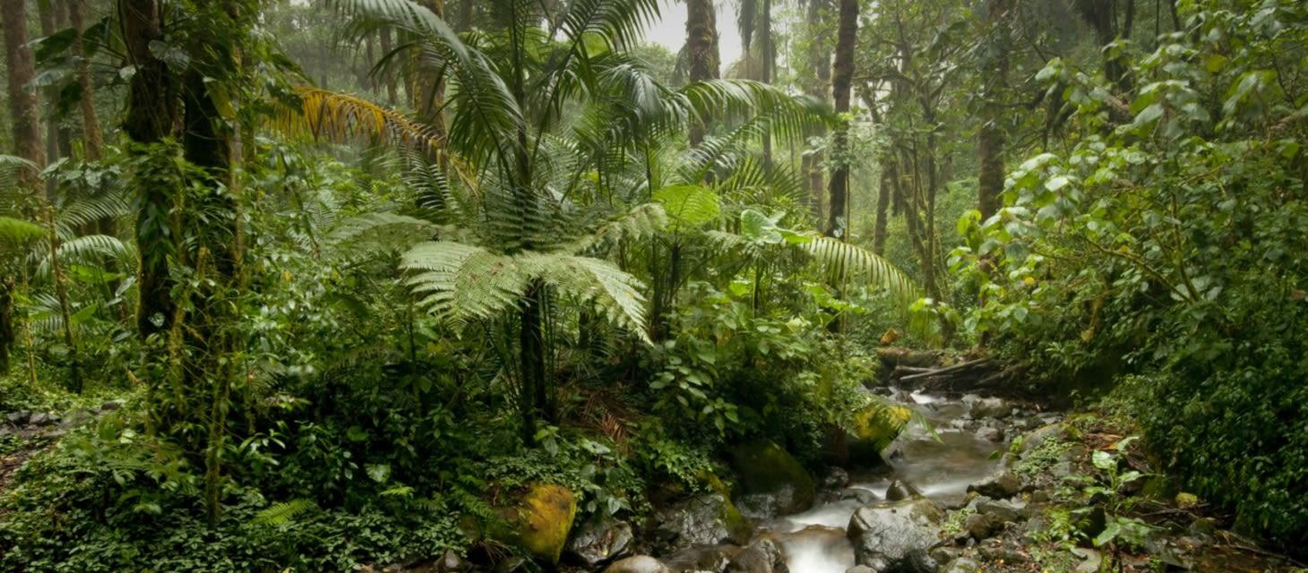 Panama Canal Area & Rainforest