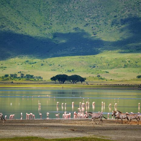 Kenya in Style -  Private Travel