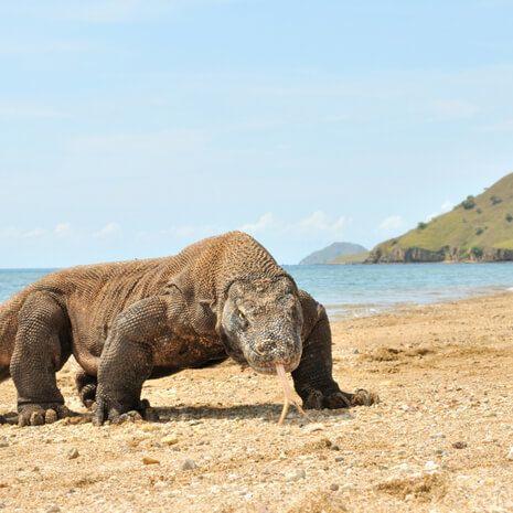 Indonesian Wildlife Adventure - Private Travel