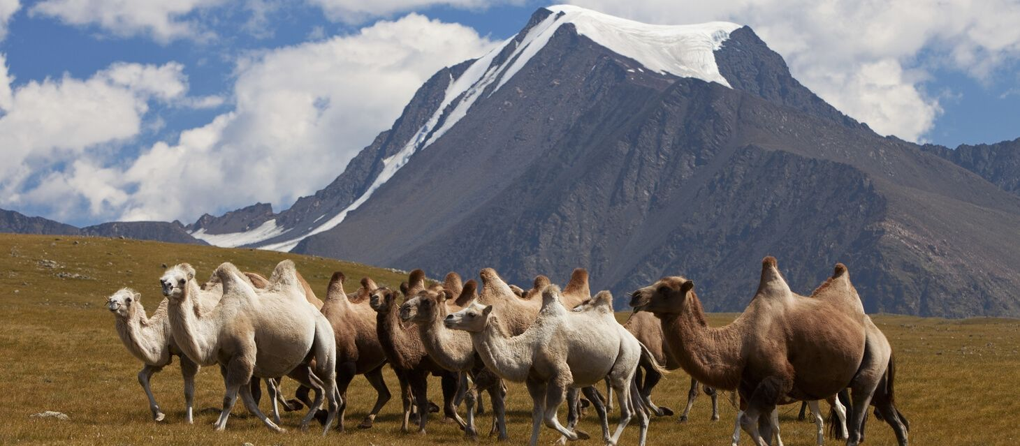 Khogno Khan Natural Reserve
