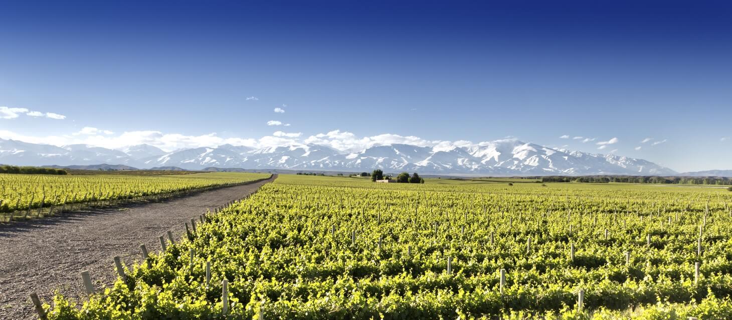 Mendoza & Winelands