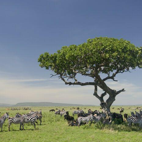 Highlights of Tanzania