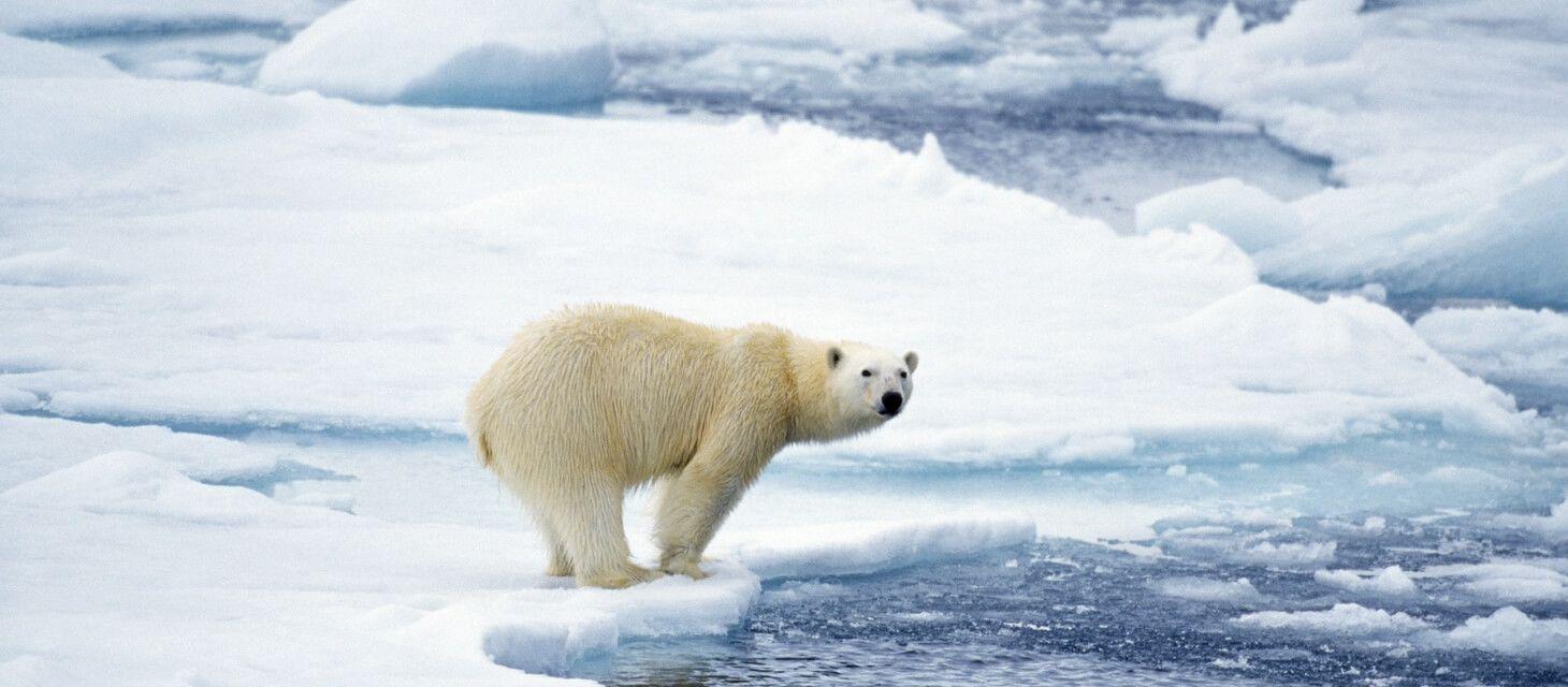 Churchill Polar Bear Adventure