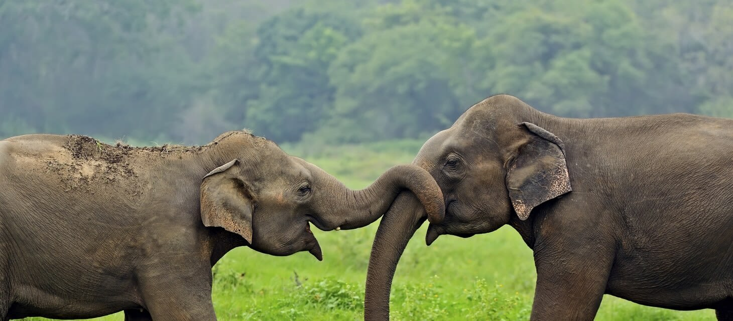 Sri Lanka: The Enchanted Island