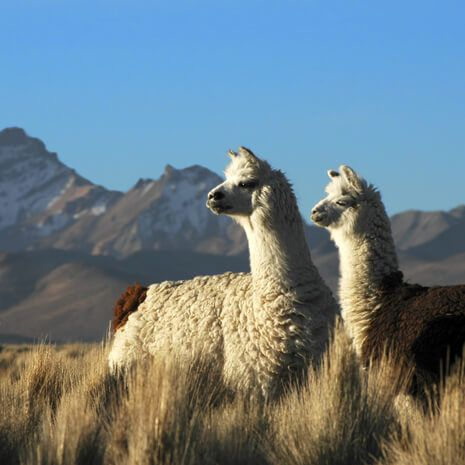 peru-and-bolivia-heart-of-the-andes