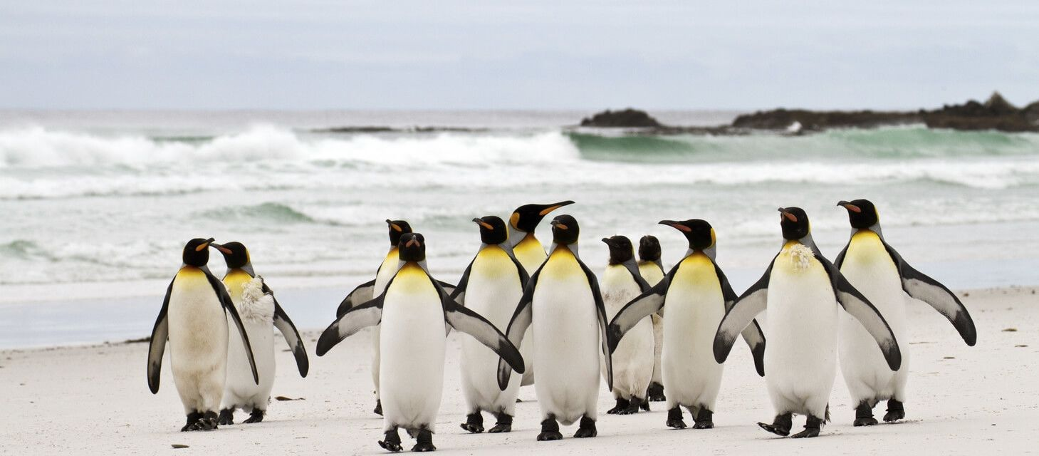 /destinations/south-america/falkland-islands - overview page