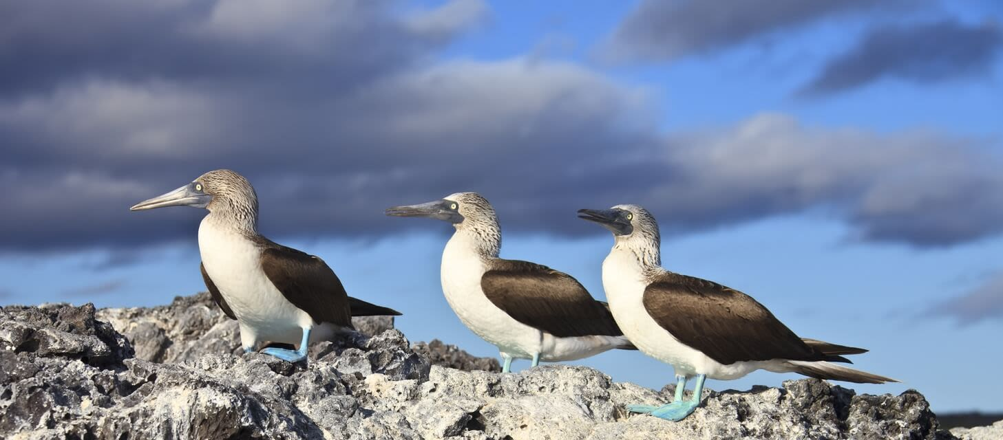 /destinations/south-america/ecuador-and-the-galapagos - overview page