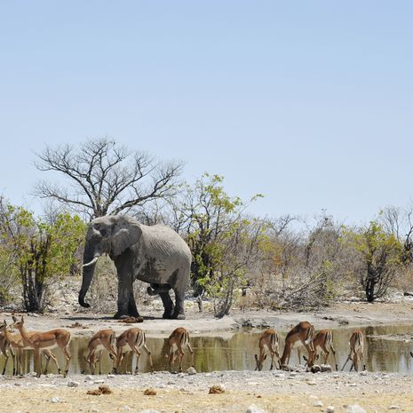 Namibia: Untouched Wilderness (Self Drive) - Private Travel