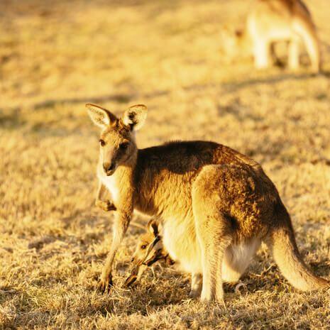 Highlights of Australia & New Zealand