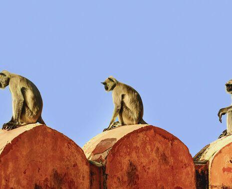 Nimaj, India