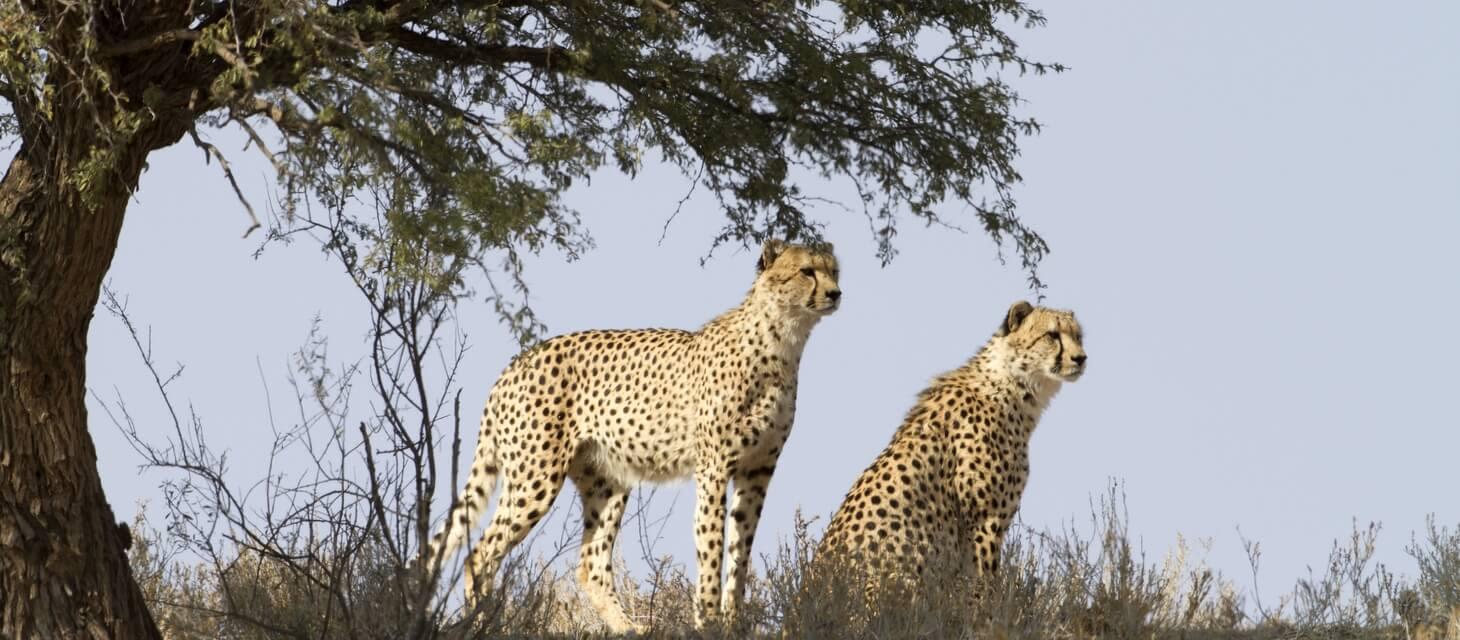 The Waterberg (Safari), South Africa