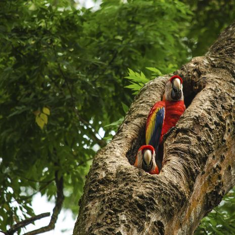 Luxury Tour of Costa Rica - Private Journey