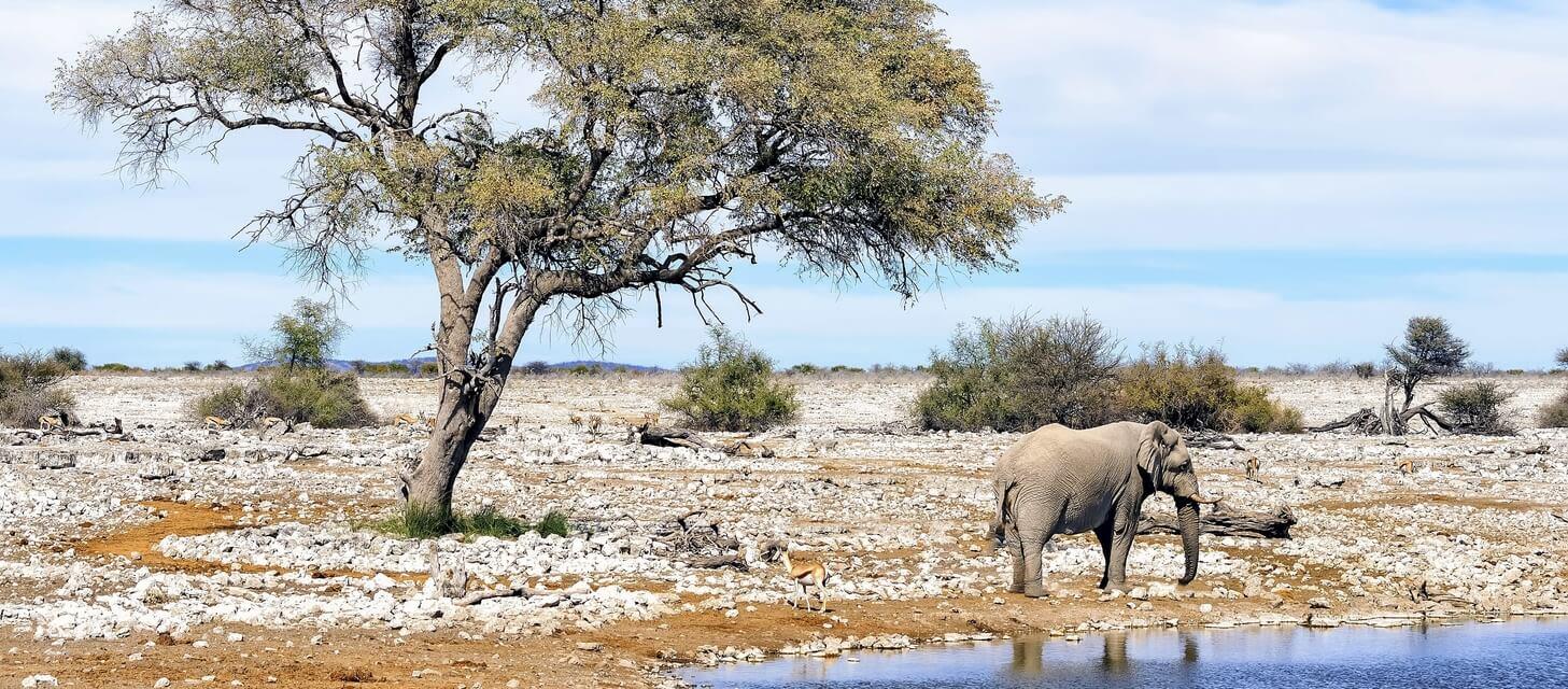 Namibia: Untouched Wilderness