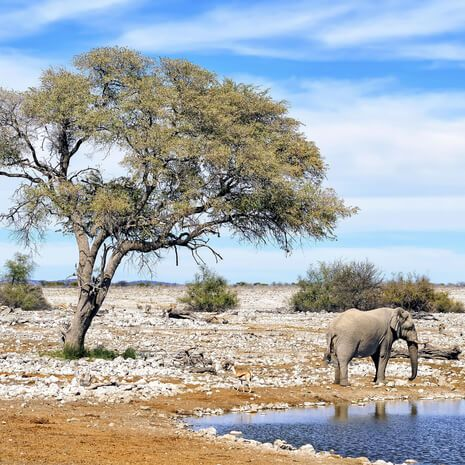 Namibia: Untouched Wilderness