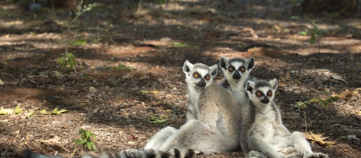 The South East, Madagascar