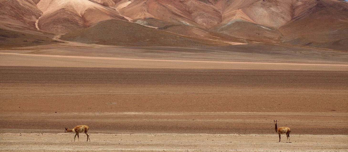 Bolivia Explorer - Private Travel