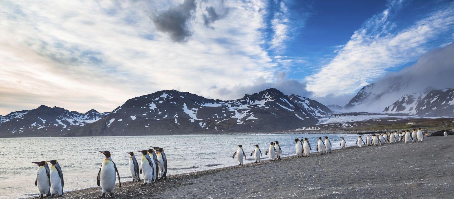 Falkland Islands Encounters - Private Travel