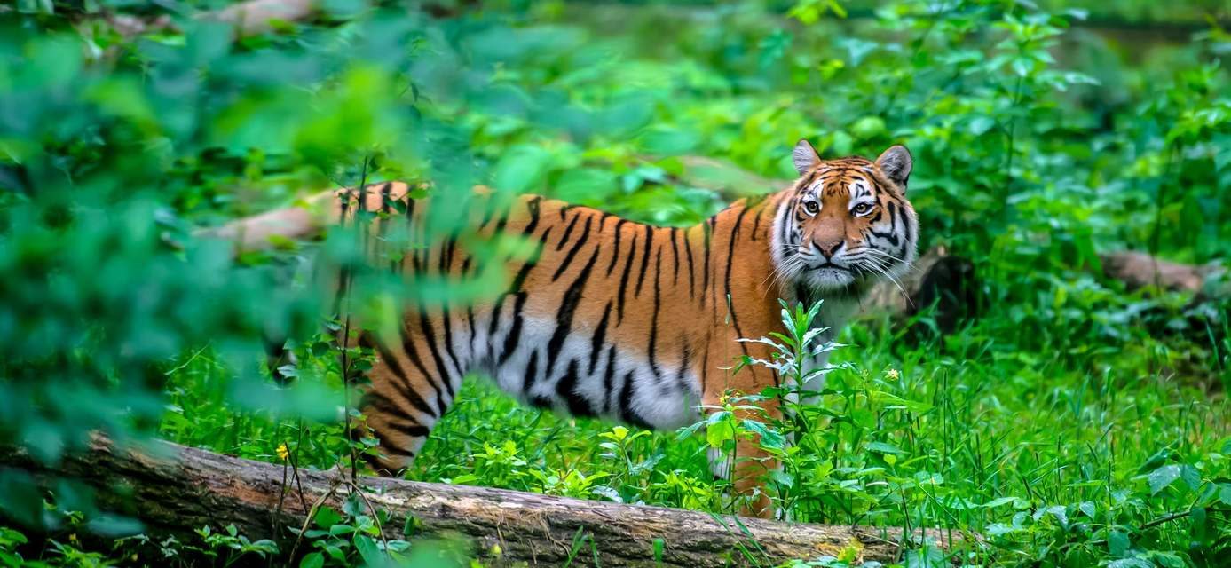 An Indian Wildlife Odyssey, group tour