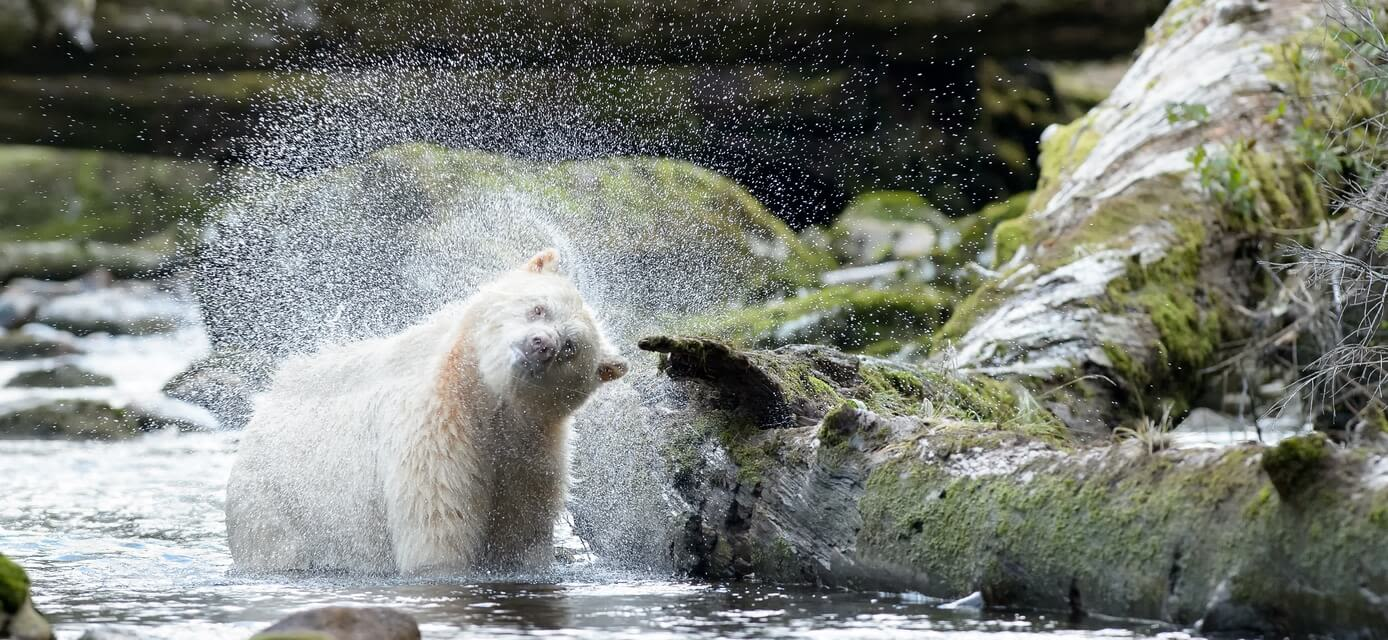 Great Bear Rainforest Cruise