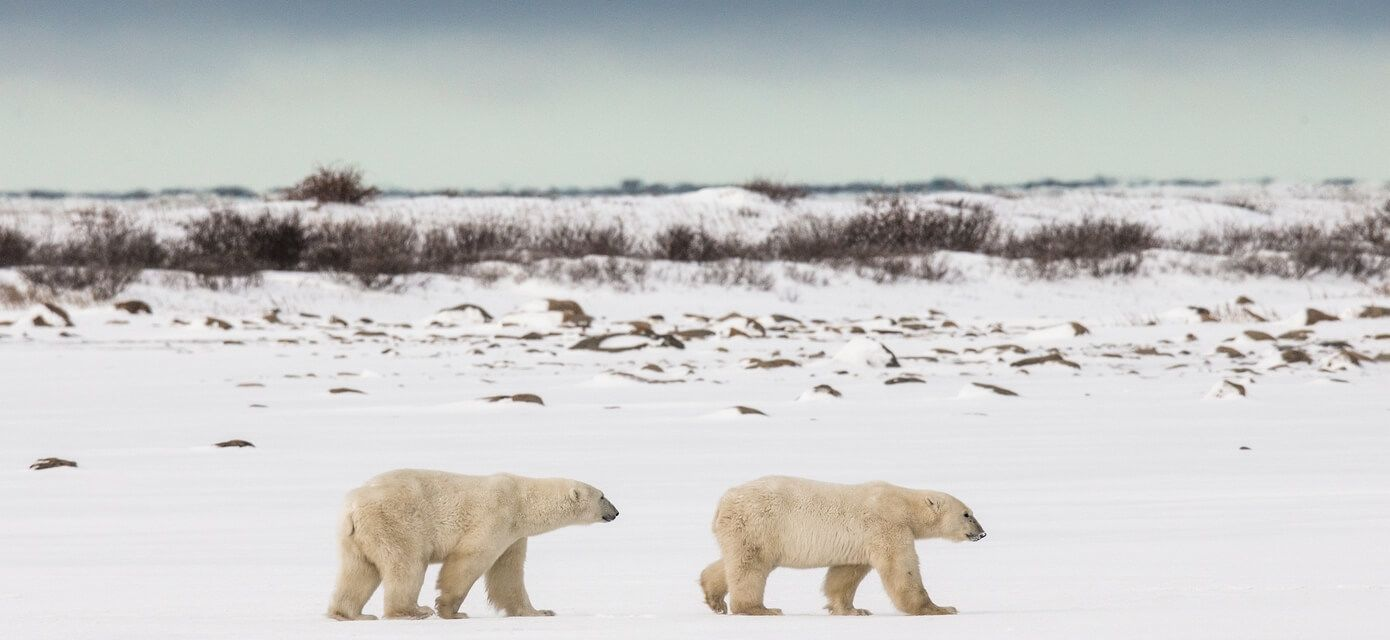 Birds, bears & Belugas, Canada