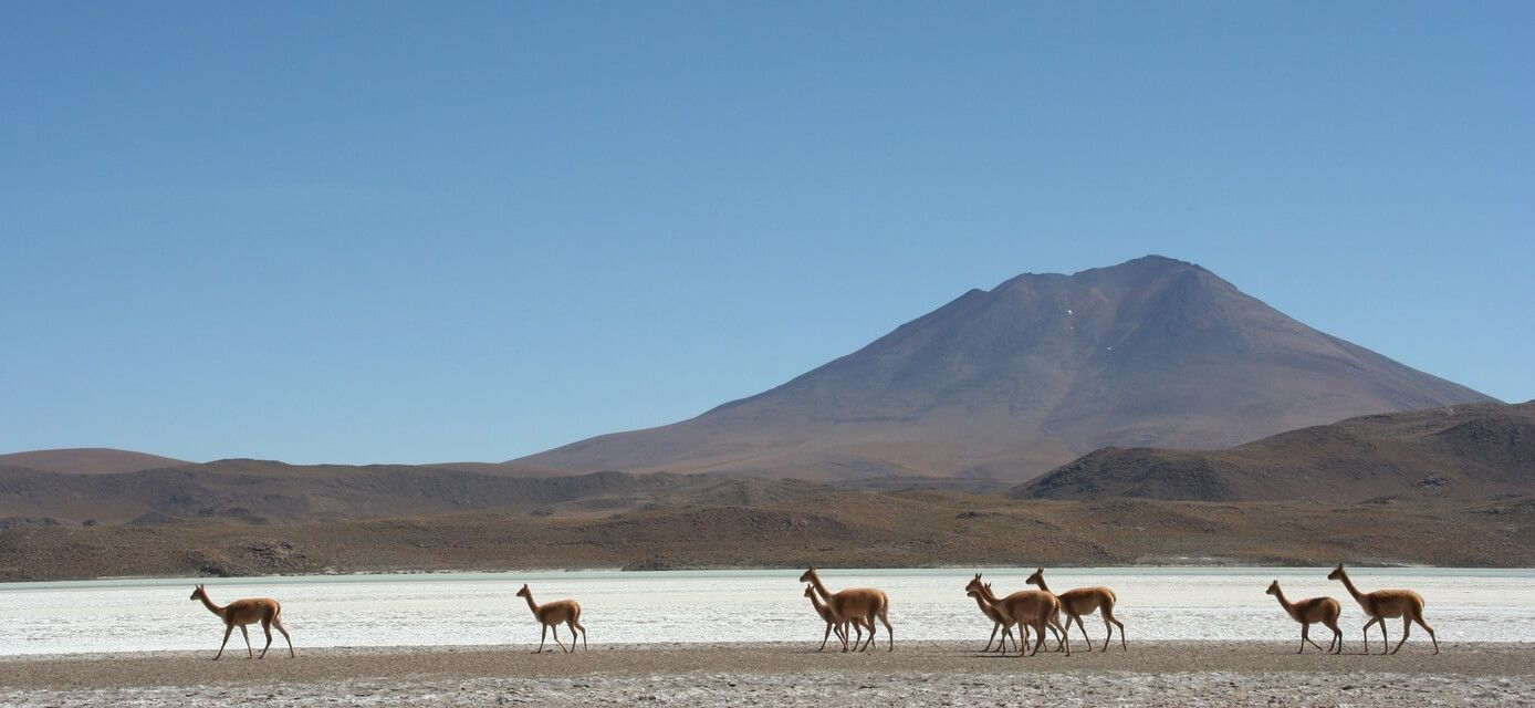 Chile Solo Travellers Tours