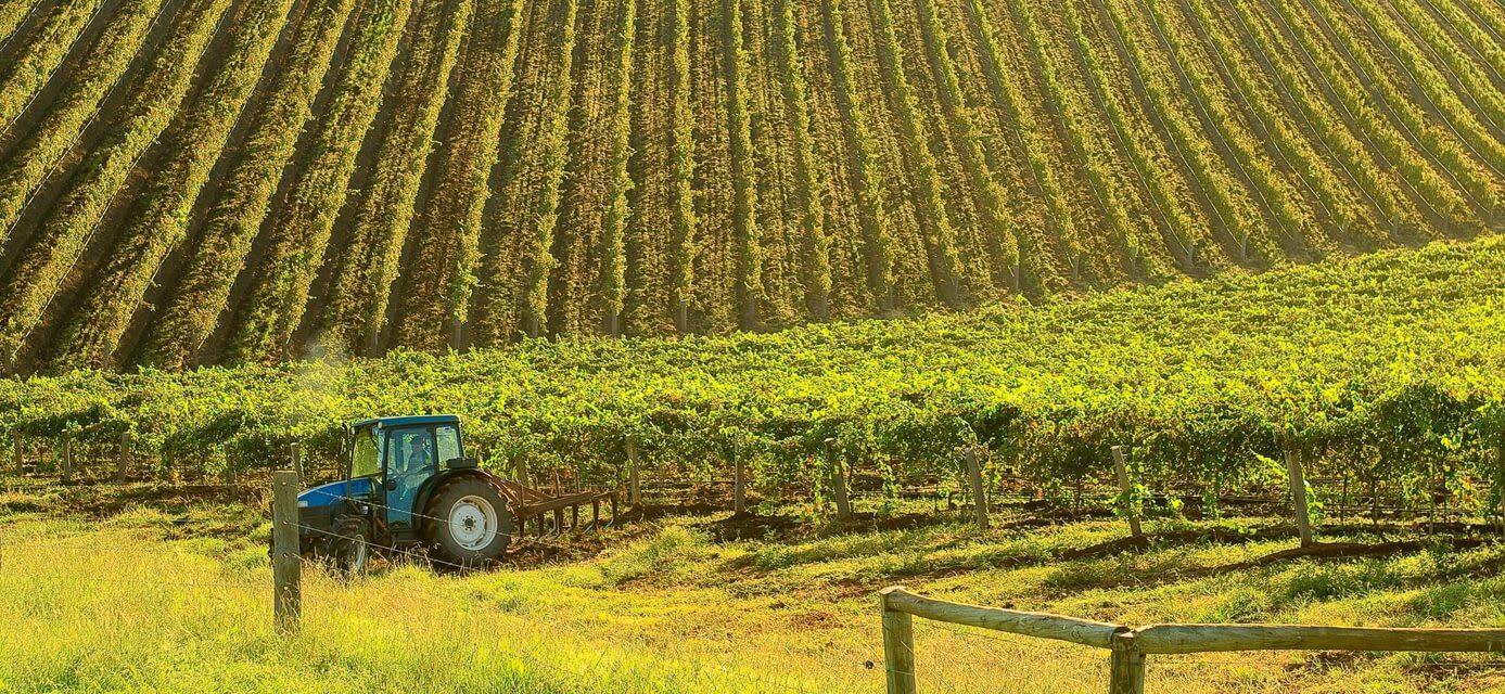 Vineyards, Hunter Valley