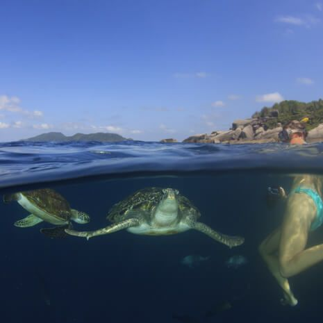 Snorkelling with Turtles in Ecuador