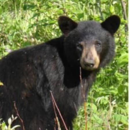 State police and road crews were responding to the Taconic Parkway in Hopewell Junction where a dead bear was found on the center median near I-84.