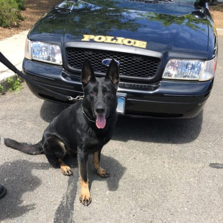 Norwalk Police Service Dog Kimbo took down the suspect in a robbery at a Norwalk deli Monday morning.