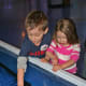 The hands-on jellyfish exhibit has become popular among children.