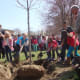 Wolfpit Elementary School students and Norwalk officials plant a red maple tree in celebration of Arbor Day.