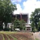 """Stamford Hospital's new addition looms over Fairgate Farm. Located at 129-143 Stillwater Ave., the is farm having a free public event called """"It Isn't Easy Being Green,"""" Saturday from noon until 2 p.m."""