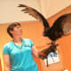 Dante, a Turkey Vulture, spreads his wings at the Wilton Library Wednesday before an educational session with a group of children.