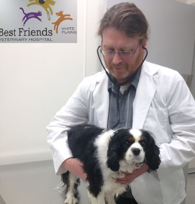 Best Friends Veterinary Hospital is offering free initial pet exams for new patients.