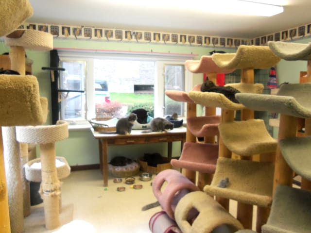 Animals in Distress, a no-kill cat shelter in Wilton currently home to 28 cats, is without heat.