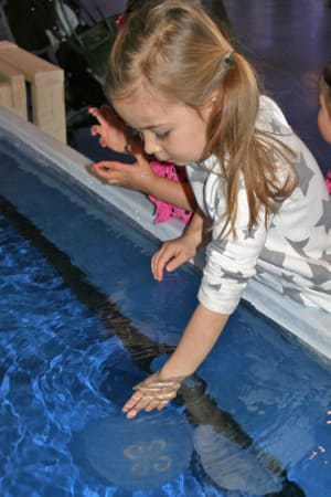The Maritime Aquarium in Norwalk is inviting visitors to touch a jellyfish with a new program beginning Saturday, Jan. 18.