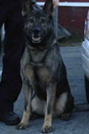 Harrison police canine Arby is retiring after nearly 10 years of service in the department.