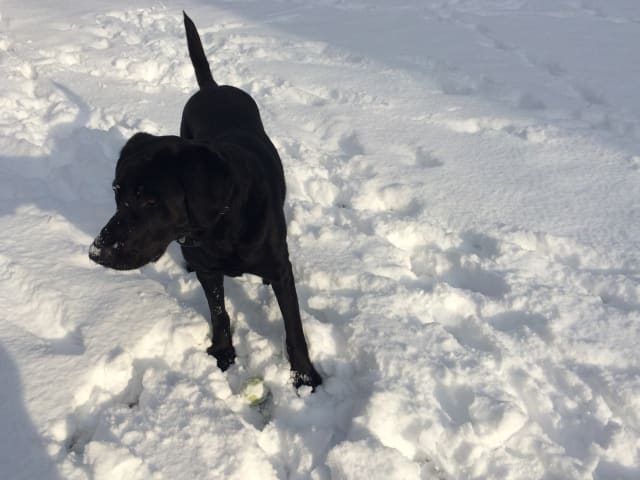 Being outside and getting exercise is important for dogs, but the ASPCA is urging Fairfield County pet owners to be careful with how much time they spend outside in the freezing temperatures.