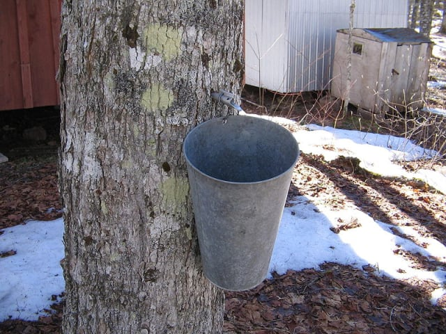 Learn about making maple syrup at Wilton's Ambler farm on Saturday, March 8.