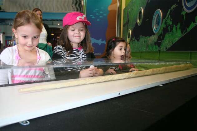 Viewing the tusk are, from left: Nina Alexakis, 4 of Dumont, N.J.; Jaelin Murphy, 5, of Bergenfield, N.J.; Natalia Ramirez, 5, of Dumont, N.J.; and Brooke Mallardi, 4, of Bergenfield, N.J.
