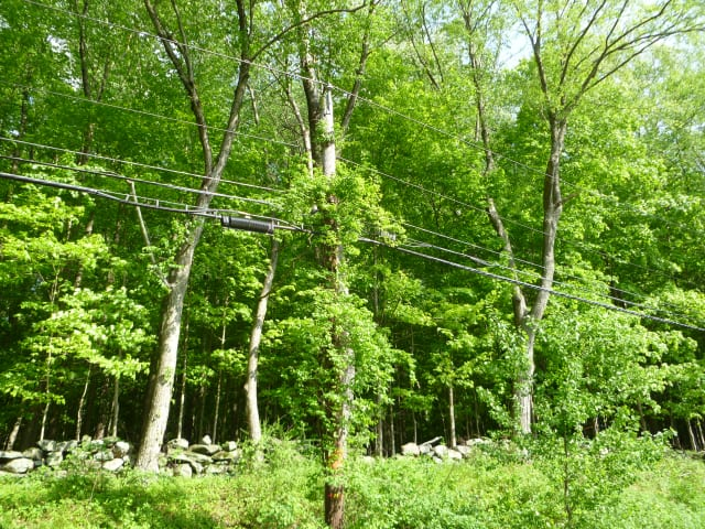 United Illuminating plans to trim or remove trees that could knock out power lines during a storm.