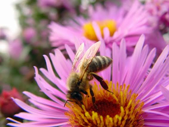Homeowners can do several things on their landscape to help honey bees.