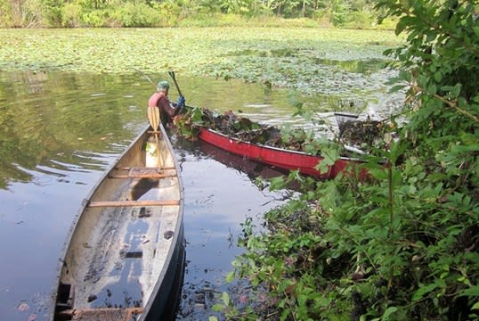 The Horseshoe Pond Lily Pad Project cleared a significant corner of the Wilton pond in past years.