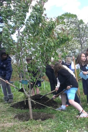Members of the Community Service Club at Rogers' International School in Stamford planted a cherry tree at the school for Arbor Day 2012.