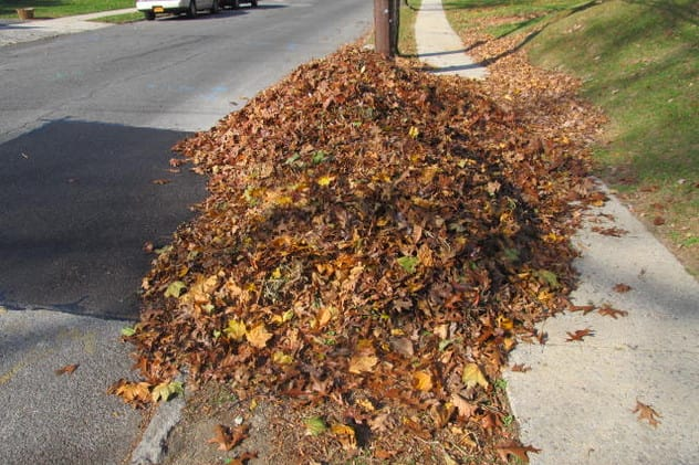 Putting leaves on the curb for city pickup will longer be allowed in New Rochelle.