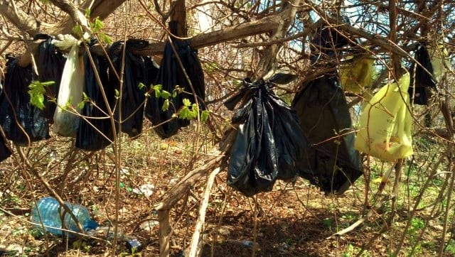 The dead cats and kittens were found by Yonkers DPW workers in various stages of decomposition, tied in garbage bags and hung in a tree.