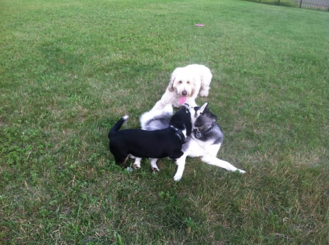 S.R. Dog Training in Somers is offering tips to keep pets safe in the springtime.