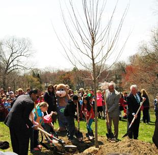 Almstead Tree & Shrub Care Co. is celebrating, Arbor Day, Earth Day and its 50th anniversary by planting 50 trees throughout Westchester County and Fairfield County.