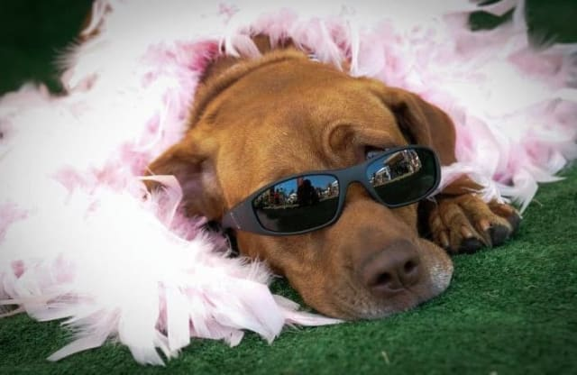 New Canaan goes to the dogs on Sunday for the annual FUNraiser Festival for dogs. It will be held between noon and 3 p.m.